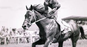 Retrato del caballo que compite con en la acción Imagen de archivo libre de regalías