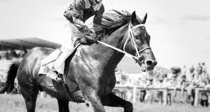 Retrato del caballo que compite con en la acción Imagen de archivo