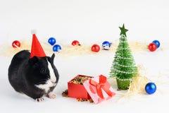 Retrato del conejillo de Indias lindo en un fondo de la Navidad Conejillo de Indias con el sombrero de la Navidad en él Fondo div fotos de archivo libres de regalías