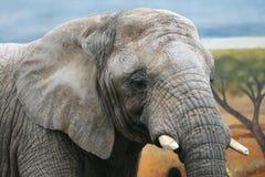 Retrato del elefante Fotografía de archivo