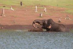 Retrato del elefante Fotografía de archivo libre de regalías