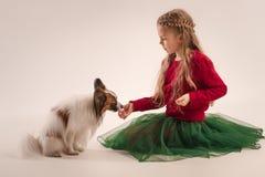 Retrato del estudio de un pequeño perrito de bostezo Papillon Imagen de archivo