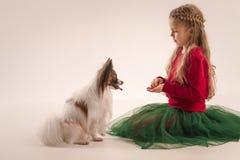 Retrato del estudio de un pequeño perrito de bostezo Papillon Foto de archivo libre de regalías