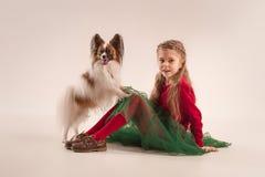 Retrato del estudio de un pequeño perrito de bostezo Papillon Imagen de archivo libre de regalías