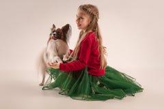 Retrato del estudio de un pequeño perrito de bostezo Papillon Fotografía de archivo libre de regalías