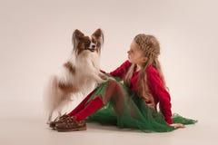 Retrato del estudio de un pequeño perrito de bostezo Papillon Fotos de archivo libres de regalías