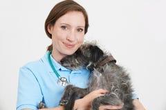 Retrato del estudio del cirujano veterinario de sexo femenino Holding Lurcher Dog Fotografía de archivo libre de regalías