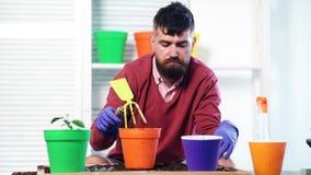 Retrato del florista moreno alegre que tiene planta de la casa La mejor afici?n Hombre joven hermoso que planta mientras que se s metrajes