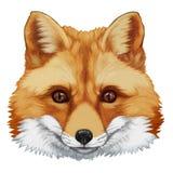retrato del Fox ilustración del vector