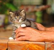 Retrato del gatito Fotos de archivo