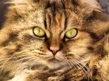 Retrato del gatito imagen de archivo