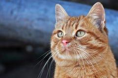 Retrato del gato Fotos de archivo