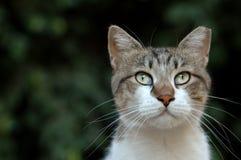 Retrato del gato Imágenes de archivo libres de regalías