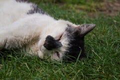 Retrato del gato Imagen de archivo