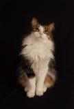 Retrato del gato Fotografía de archivo libre de regalías