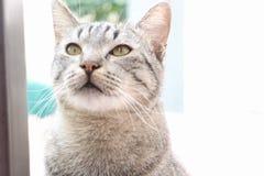 Retrato del gato Fotografía de archivo