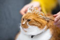 Retrato del gato casero noruego blanco rojo con la corona de la princesa en la cabeza imagen de archivo