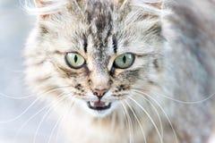 Retrato del gato con los ojos verdes Imágenes de archivo libres de regalías