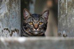 Retrato del gato curioso de ojos marrones Foto de archivo libre de regalías