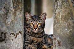 Retrato del gato curioso de ojos marrones Imágenes de archivo libres de regalías