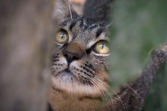 Retrato del gato curioso de ojos marrones Imagen de archivo