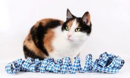 Retrato del gato de Oktoberfest imagenes de archivo