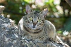 Retrato del gato del perrito imágenes de archivo libres de regalías