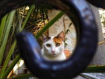 Retrato del gato en el marco foto de archivo