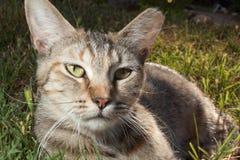 Retrato del gato en hierba Fotos de archivo
