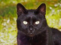 Retrato del gato en la hierba imágenes de archivo libres de regalías