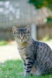 Retrato del gato en un césped verde foto de archivo