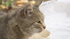 Retrato del gato gris almacen de metraje de vídeo