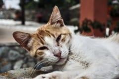 Retrato del gato gris Imagen de archivo libre de regalías