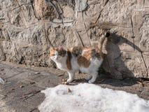Retrato del gato hermoso del jengibre en el asfalto Fotografía de archivo libre de regalías