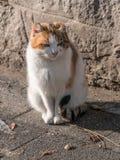 Retrato del gato hermoso del jengibre en el asfalto gato Rojo-dirigido Imágenes de archivo libres de regalías