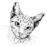 Retrato del gato Ilustración drenada mano Fotografía de archivo
