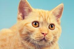 Retrato del gato lindo imagen de archivo libre de regalías