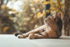 Retrato del gato marrón en naturaleza Fotografía de archivo libre de regalías
