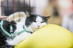 Retrato del gato muy triste que miente en la almohada en la adopción que espera de la jaula para o del gato enfermo en la clínica Fotografía de archivo libre de regalías