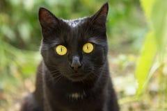 Retrato del gato negro con los ojos amarillos grandes y cierre de la mirada de la penetración para arriba, macro foto de archivo libre de regalías