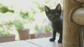 Retrato del gato negro divertido curioso del bebé que mira fijamente afuera en el jardín - metrajes