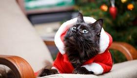 Retrato del gato del ` s del Año Nuevo en el traje que mira de lado Imágenes de archivo libres de regalías