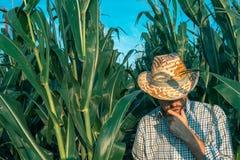 Retrato del granjero de sexo masculino en campo de maíz imagen de archivo libre de regalías