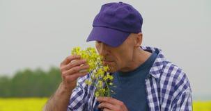 Retrato del granjero feliz Holding Rapeseed Blossoms en la granja almacen de video