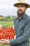 Retrato del granjero joven que sostiene una caja llena con el str rojo fresco imagenes de archivo
