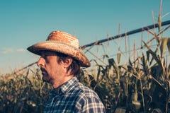 Retrato del granjero serio en campo de maíz foto de archivo libre de regalías
