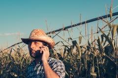 Retrato del granjero serio que usa el teléfono móvil en campo de maíz imagenes de archivo