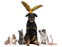 Retrato del grupo de animales domésticos delante del blanco Fotografía de archivo