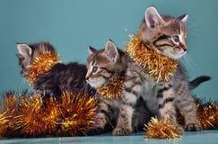 Retrato del grupo de la Navidad de gatitos fotografía de archivo libre de regalías