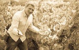 Retrato del hombre alegre cerca de las uvas en viñedo Foto de archivo